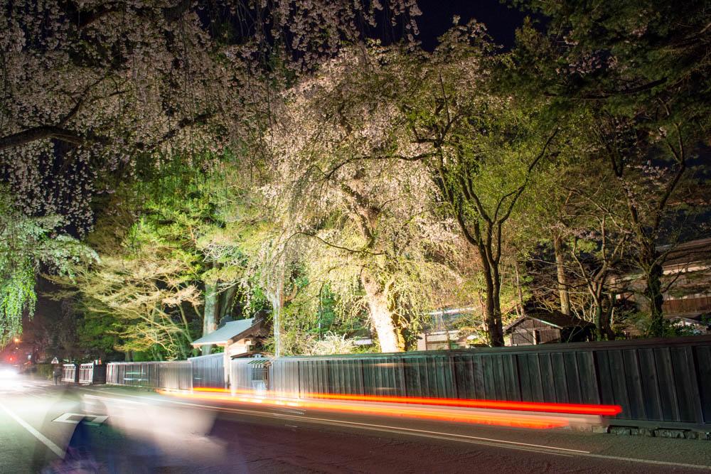 桜満開!武家屋敷ライトアップと角館夜の屋台