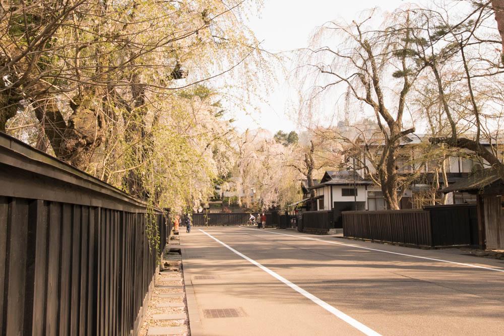 東北を代表する武家屋敷群 角館 真骨頂の桜並樹とお食事処