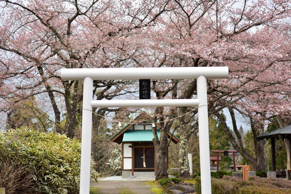 なぜここに?秋田県鹿角市で見つけた「桜山神社」 盛岡との関係