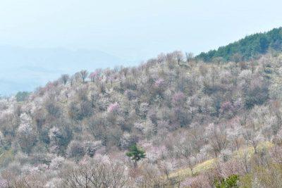 himakami
