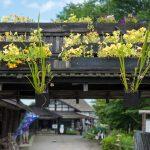 20万株の花菖蒲が咲く「鯉艸郷」へ夏の十和田湖ドライブ