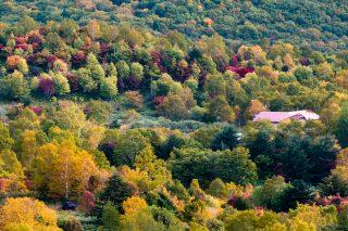 日本一大きい「西明寺栗」を求めて紅葉の八幡平を越える
