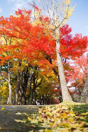 盛岡城跡公園 紅葉
