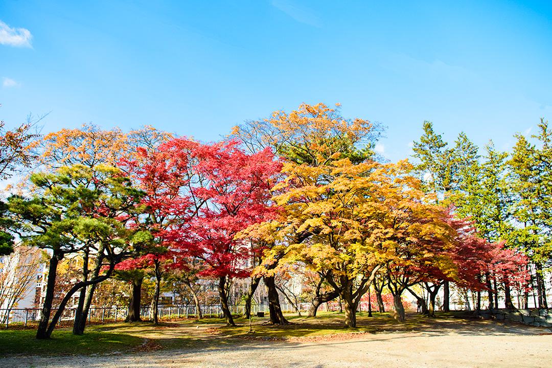 盛岡城跡公園の紅葉