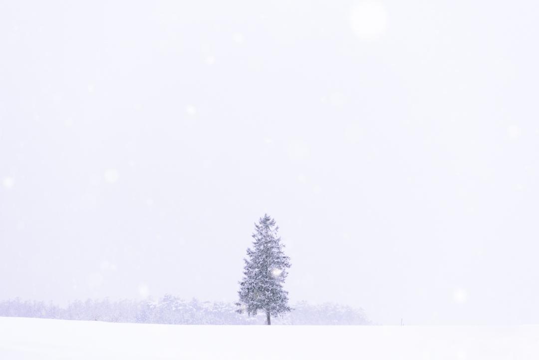 盛岡のクリスマスの木