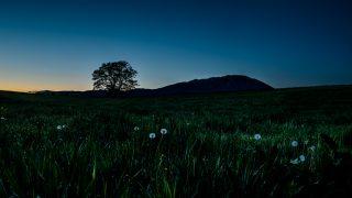 小岩井農場の一本桜 夕景現像ネタばらし